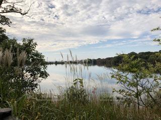 近くに池のアップ - No.844379