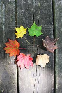 落ち葉の色見本の写真・画像素材[830178]