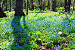 緑豊かな森の真ん中の木の写真・画像素材[2272791]
