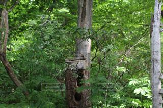 森の鳥の写真・画像素材[2272806]
