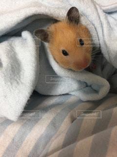 近くの動物のぬいぐるみは毛布に横たわっています。 - No.823613