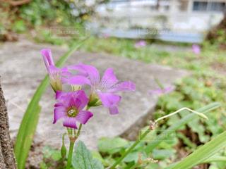 植物にピンクの花の写真・画像素材[1837714]