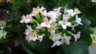 お花の写真・画像素材[2066254]