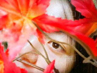 赤い花を身に着けている女性のクローズアップの写真・画像素材[2947131]
