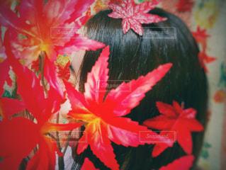 花のクローズアップの写真・画像素材[2947151]