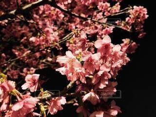桜の写真・画像素材[4138394]