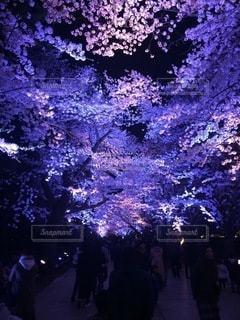 夜桜の写真・画像素材[3265673]
