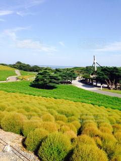 緑豊かな緑のフィールド上を歩く羊の群れの写真・画像素材[824871]