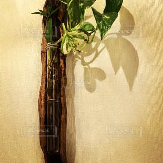 ハートの植物 - No.823840