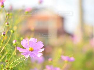 秋の写真・画像素材[824013]