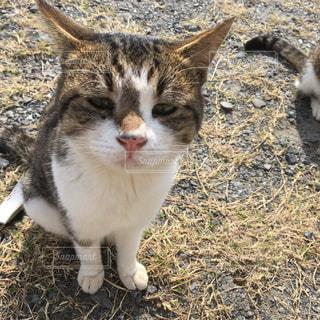 寂しげな子猫の写真・画像素材[872728]