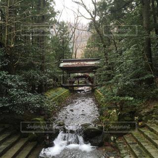苔むす景色の写真・画像素材[987443]