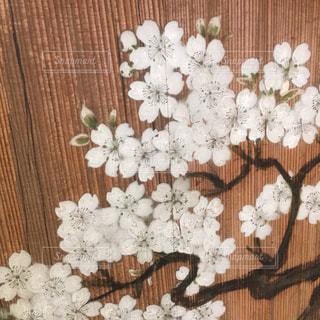 襖の桜絵の写真・画像素材[1192554]