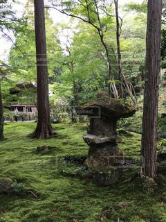 森の大きな木の写真・画像素材[824864]