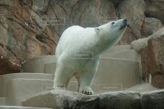 動物の写真・画像素材[24623]