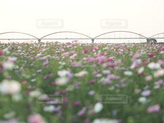 近くの花のアップの写真・画像素材[825585]