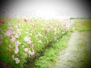 近くの花のアップの写真・画像素材[825588]