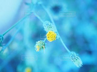 花の写真・画像素材[839355]