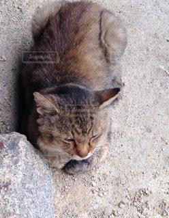 猫の写真・画像素材[830303]