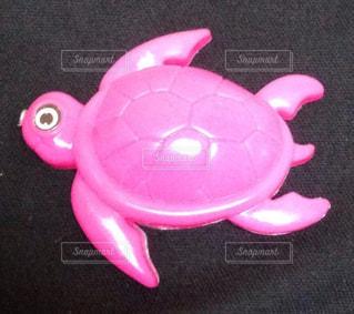 ピンクの亀の写真・画像素材[830324]