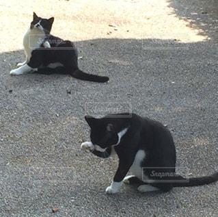 猫の写真・画像素材[833644]