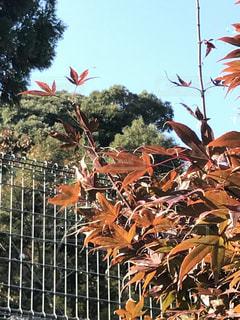 国宝  瑠璃光寺はそっと目をやると、駐車場の脇にも色づき始めた木々があります(^O^)の写真・画像素材[847764]