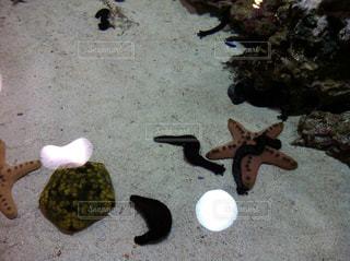 美ら海水族館の写真・画像素材[857040]