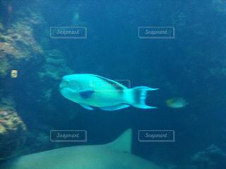 美ら海水族館の写真・画像素材[857050]