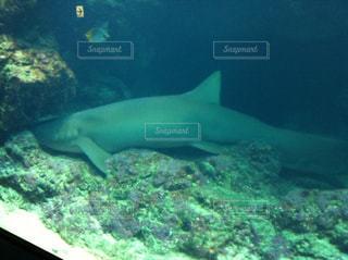 美ら海水族館の写真・画像素材[857051]