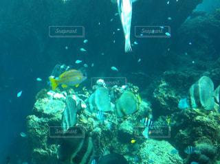 美ら海水族館の写真・画像素材[857054]