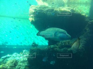 美ら海水族館の写真・画像素材[857055]