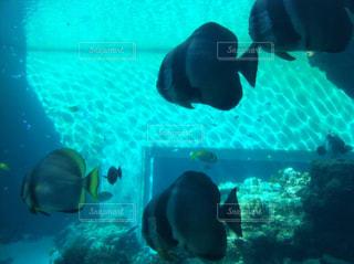 美ら海水族館の写真・画像素材[857056]