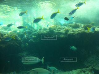 美ら海水族館の写真・画像素材[857057]