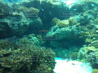 美ら海水族館の写真・画像素材[857058]