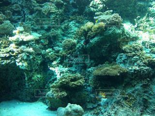 美ら海水族館の写真・画像素材[857059]