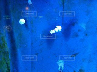 美ら海水族館の写真・画像素材[857061]