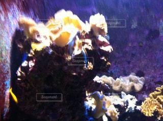 美ら海水族館の写真・画像素材[857064]