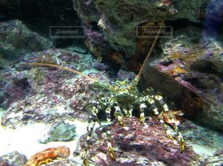 美ら海水族館の写真・画像素材[857066]