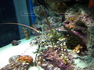 美ら海水族館の写真・画像素材[857067]