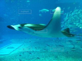 美ら海水族館の写真・画像素材[857071]