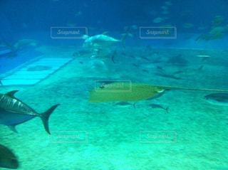 美ら海水族館の写真・画像素材[857072]