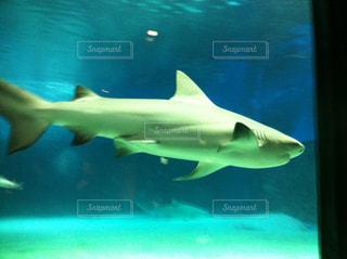 美ら海水族館の写真・画像素材[857075]