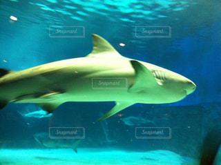 美ら海水族館の写真・画像素材[857076]