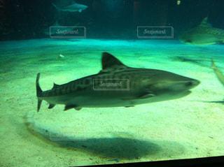 美ら海水族館の写真・画像素材[857077]
