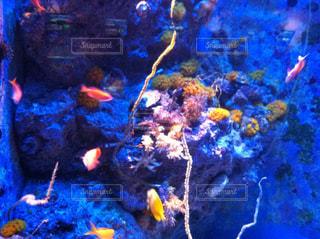 美ら海水族館の写真・画像素材[857079]