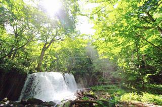 森の中の大きな滝の写真・画像素材[826062]