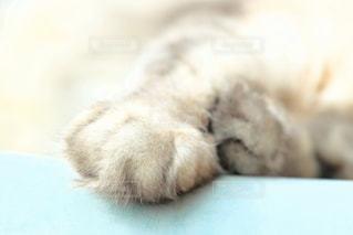 猫の写真・画像素材[834817]