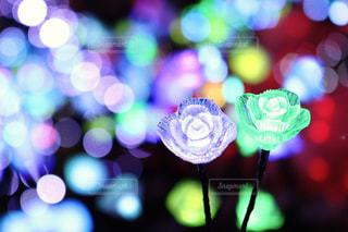 イルミネーションの花の写真・画像素材[873812]