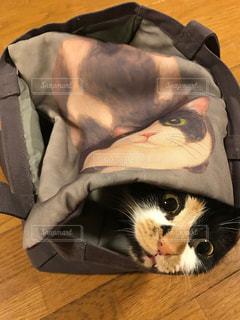 猫の写真・画像素材[827223]
