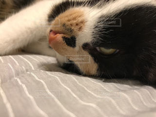 近くにベッドの上で横になっている猫のアップの写真・画像素材[866463]